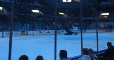Baby Tausch needs new friends to go to Admirals games with...