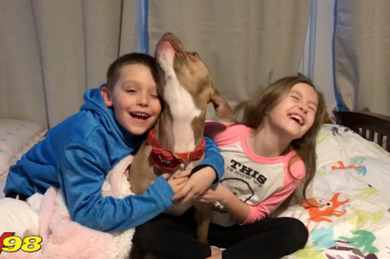 Even Chance Pit Bull