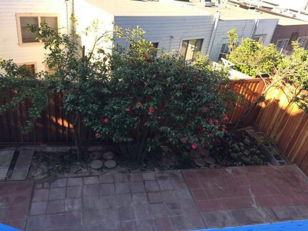 $1100 Bedroom with shared bath near transportation (ingleside / SFSU / CCSF)