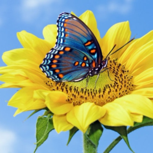 Flower and butterfly images free stock photos download 11381 intended for flower with butterfly