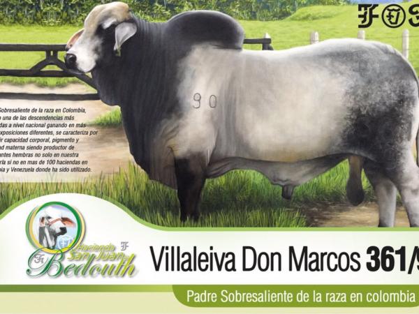 Toro Brahman Villaleiva Don Marcos 361/9 - Semen