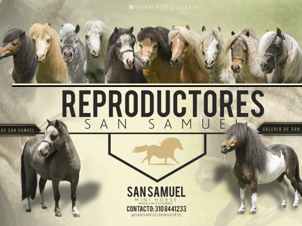 Reproductores San Samuel Mini Horses