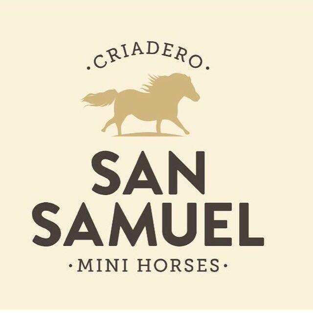 San Samuel Mini Horses