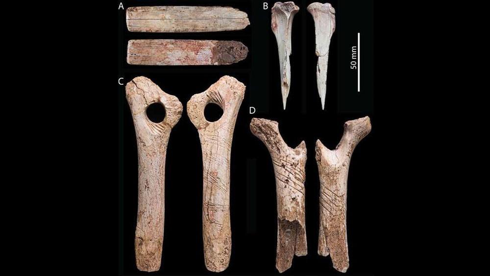 """عظام بشرية تكشف """"طقوس"""" أكلة لحوم البشر"""