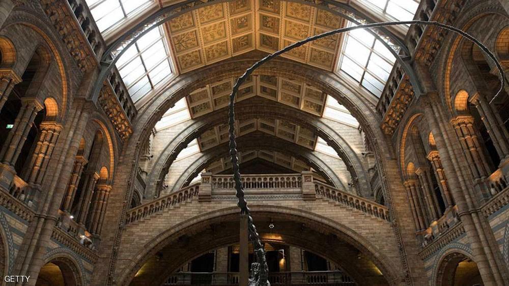 في لندن.. أغرب ما يقتنيه متحف في العالم