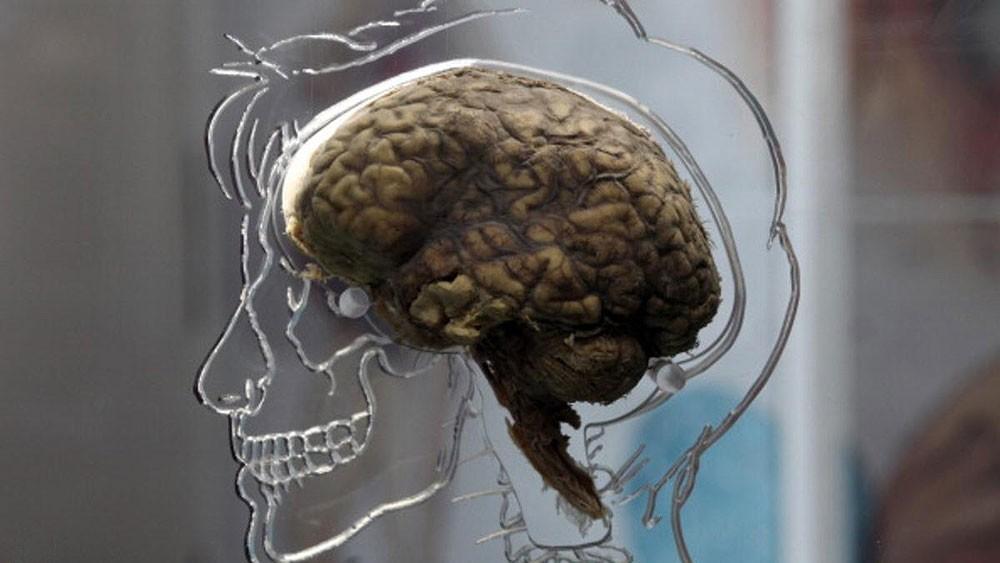 7 عادات مهمة لتحسين عمل العقل