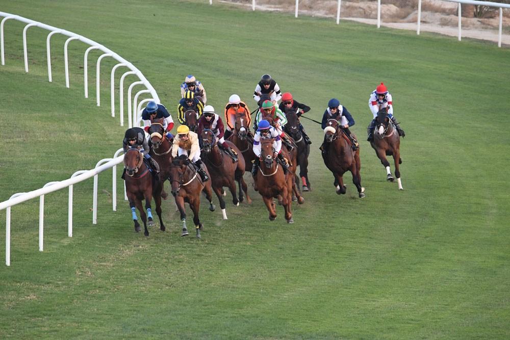"""كؤوس الحصان العربي و""""جيبك"""" تشعل المنافسة وصراع الأقوياء"""