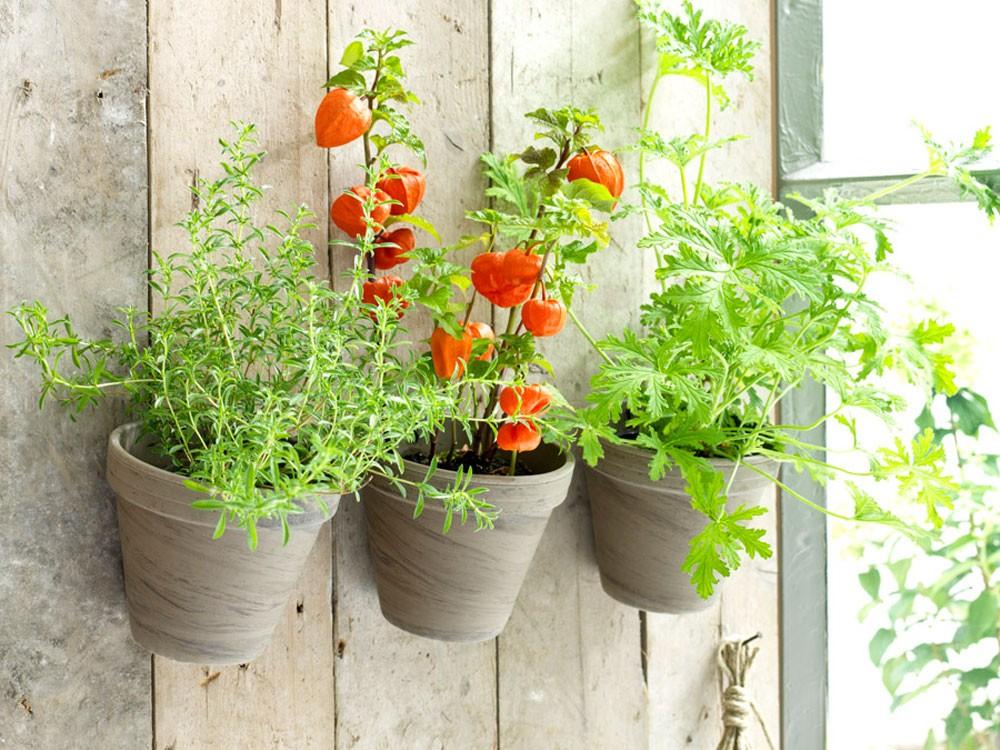 خطوات ونصائح لتجهيز حديقة منزلية صغيرة