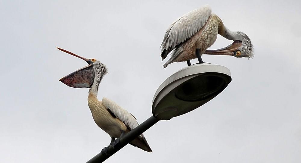 وفاة الطائر الأكثر وحدة في العالم