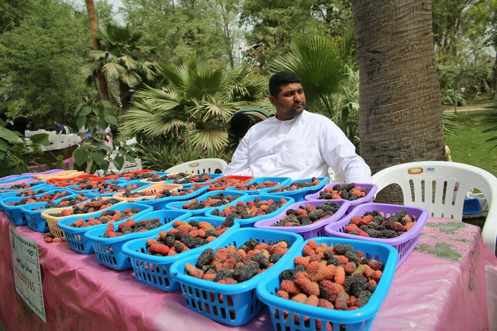 الزراعة تعلن عن إقامة مهرجان للتوت المحلي بسوق المزارعين بالبديع