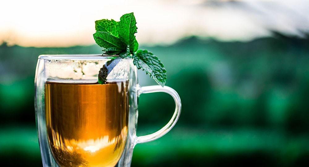 دراسة... زيت شجرة الشاي بديل للمضادات الحيوية