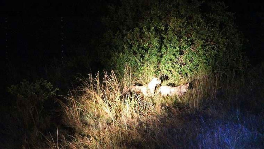 حيوانات تتحول إلى الحياة الليلية.. تعرف على السبب
