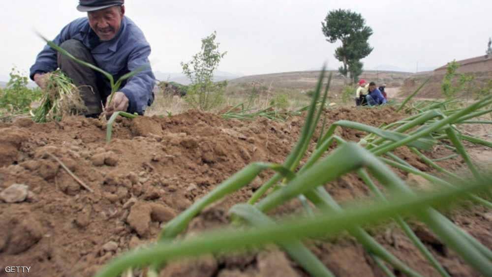 """""""فئران الجفاف"""" تكبّد الصين خسائر فادحة"""
