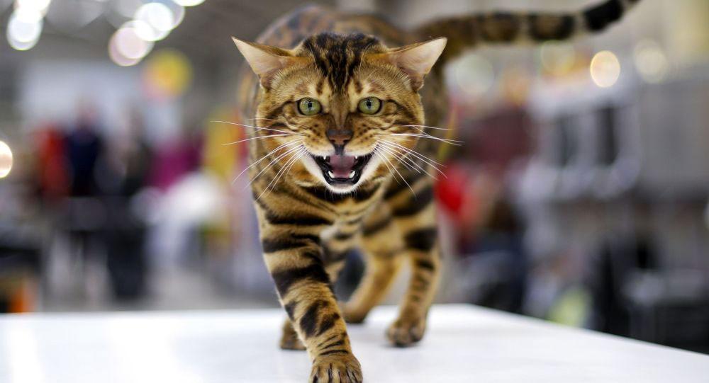 القطط قد تكون سببا لريادتك في مجال المال والأعمال