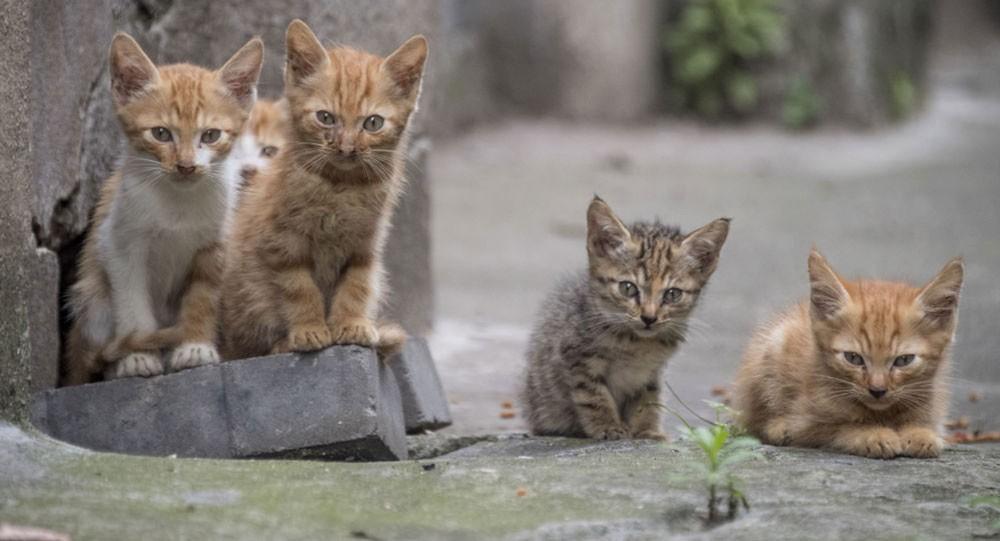 كم عدد القطط في المدينة... تعداد تجريه واشنطن