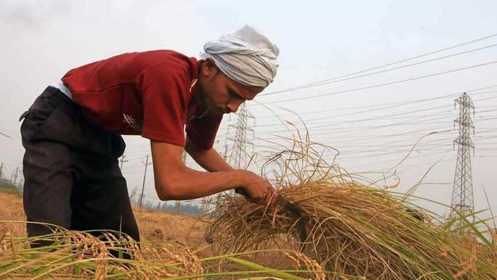 مصر تستورد مليون طن من الأرز من فيتنام