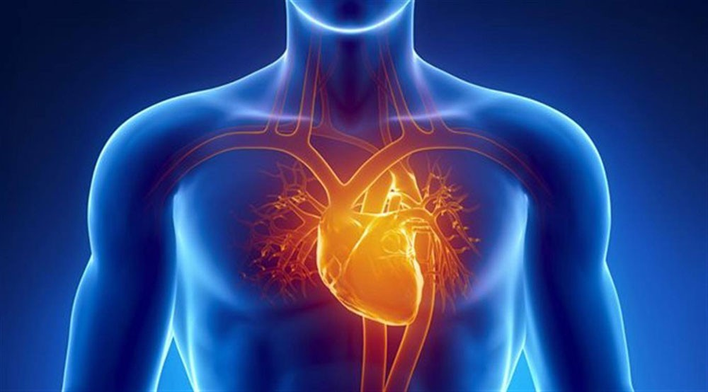 المؤشرات الصحية لتسارع نبض القلب وتباطؤه