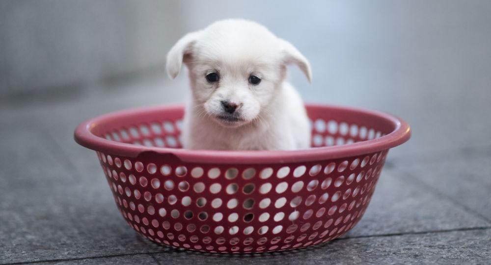 صيني يشتري كلبا تبين أنه جرذ