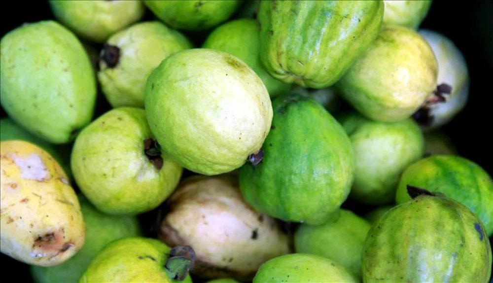 السعودية تلغي حظر استيراد الجوافة المصرية الطازجة