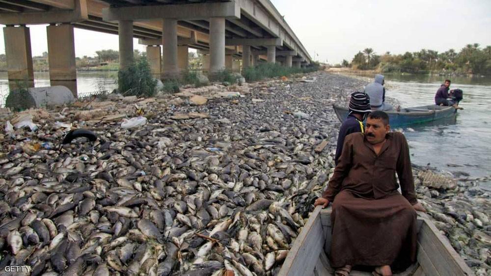 نفوق أسماك العراق.. ما دور إيران و دول الجوار؟