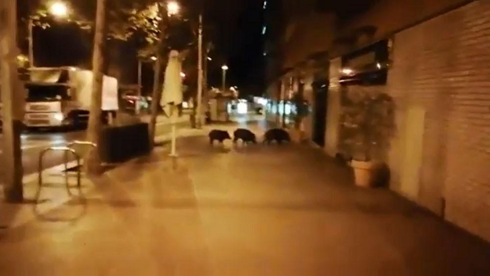 """""""زوّار من الغابة"""" يثيرون قلق الناس في برشلونة"""