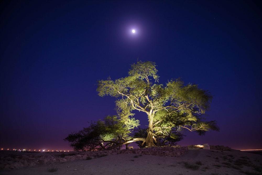 أمسية موسيقية مع فرقة إسماعيل دوّاس بموقع شجرة الحياة
