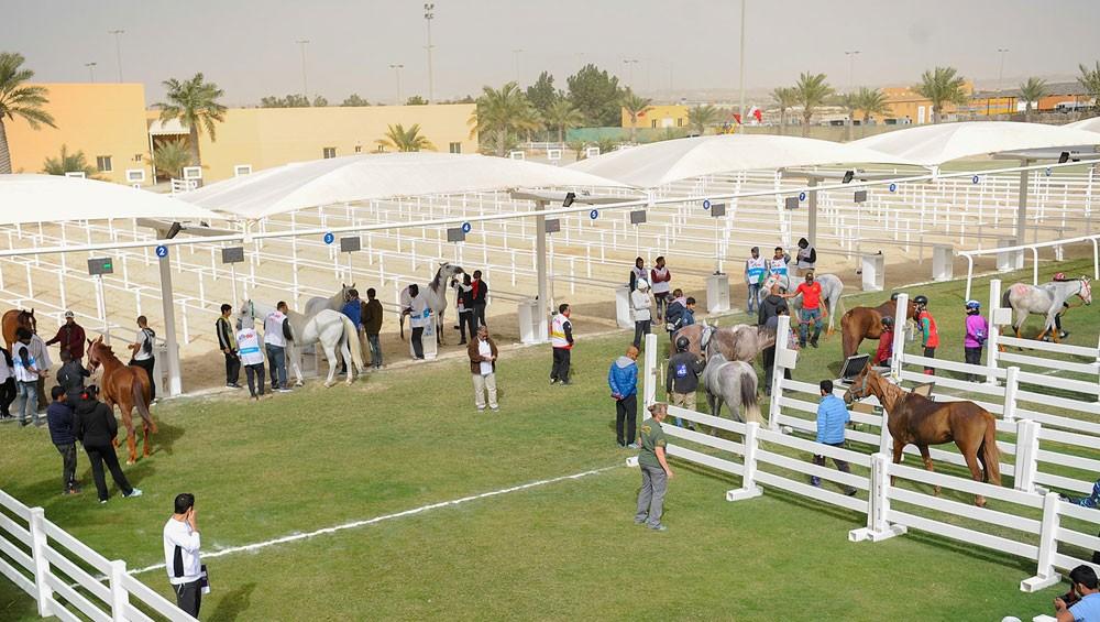 خالد بن حمد يقود فرسان سباق اليوم بمشاركة 91 فارس وفارسة