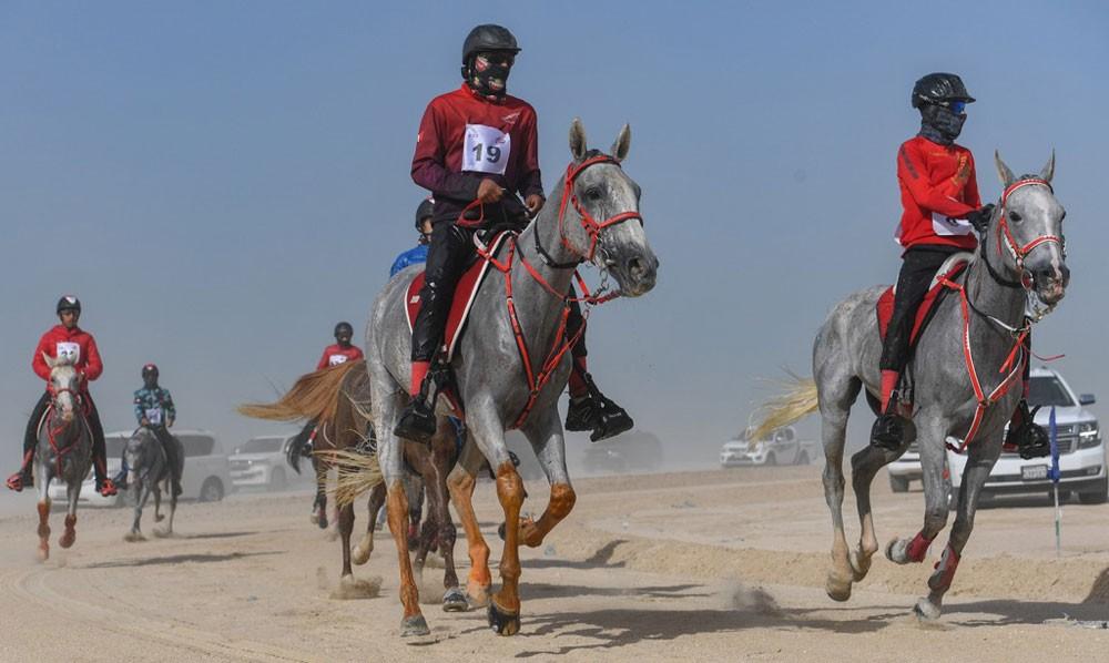 لأول مرة سباق الاسطبلات الخليجية مع جوائز قيمة في مهرجان كاس الملك