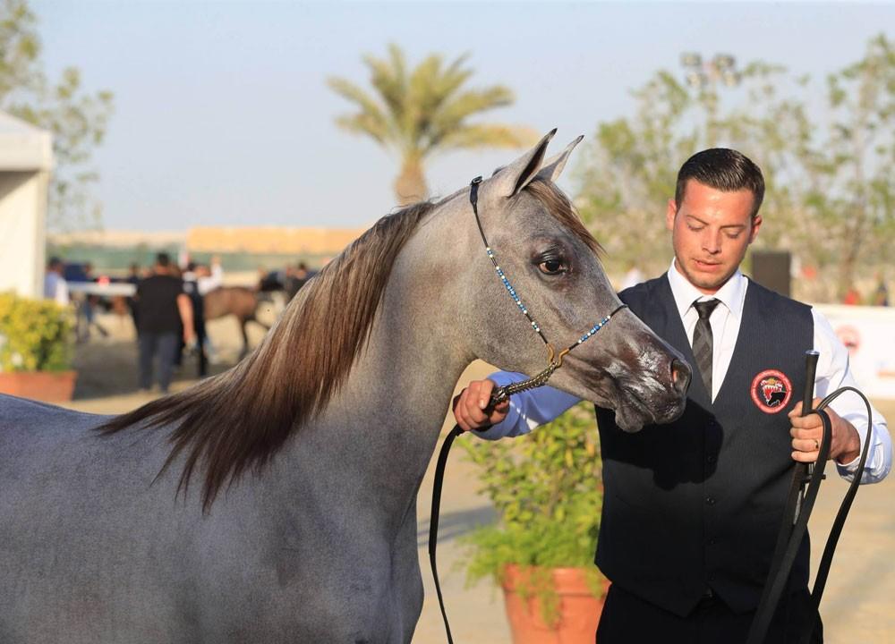 ناصر بن حمد يرحب بملاك خيل الجمال للمشاركة في البطولة