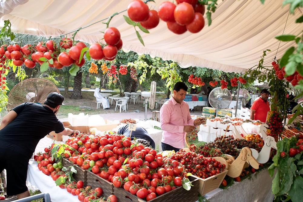 انطلاق مهرجان الطماطم بسوق المزارعين السبت القادم