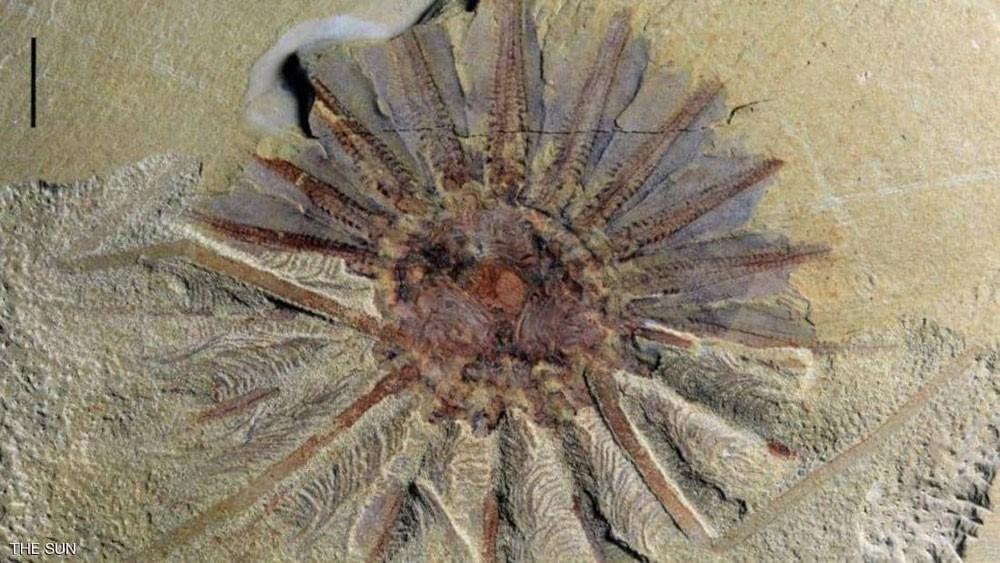 """اكتشاف """"وحش بحري"""" يزيد عمره عن 250 مليون عام"""