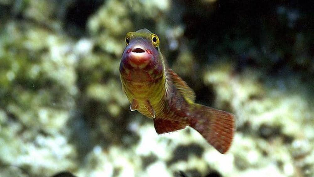 """دراسة تكشف خاصية """"مذهلة"""" عن عيون الأسماك"""
