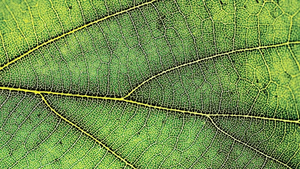 هل تشعر النباتات بالألم؟ العلم يجيب