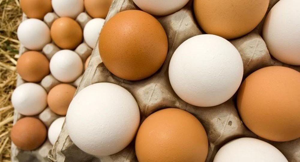 اكتشاف فائدة طبية استثنائية لقشر البيض
