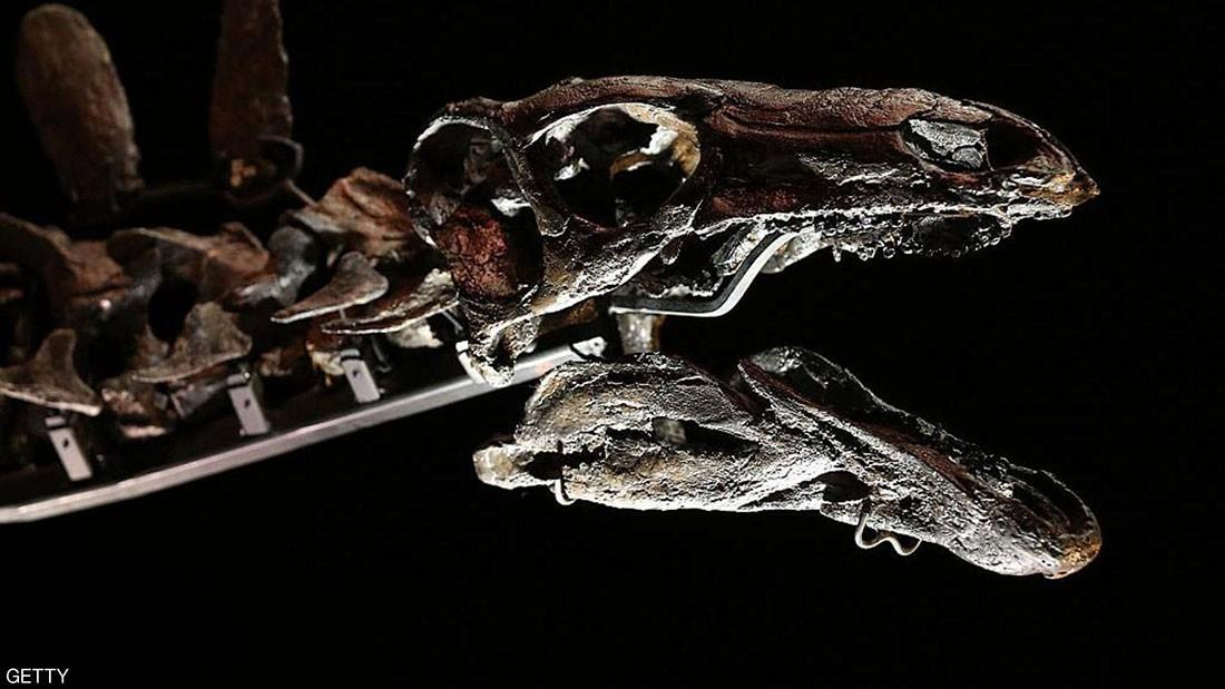 """""""سحلية الجبل"""".. ديناصور مغربي الأقدم في التاريخ"""