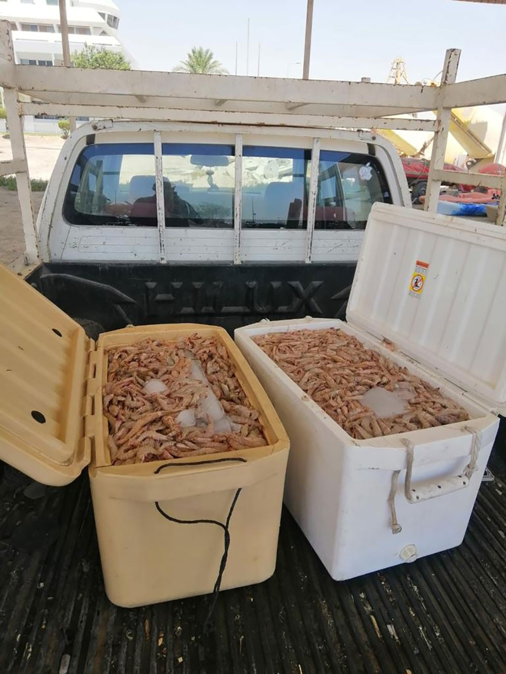 خفر السواحل: القبض على شخص قام بحيازة الروبيان الطازج وتداوله في وقت الحظر