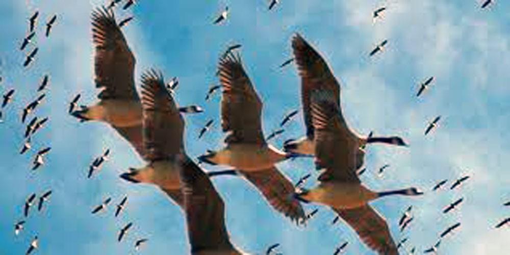"""مجزرة """"طيور نادرة"""" في إيران"""