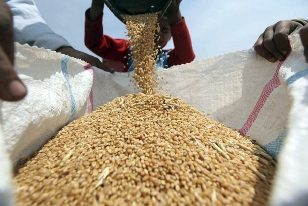 العراق يخفض مساحة القمح المروية للنصف