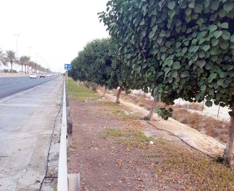 الأهالي: مظهر المسطحات الخضراء بشارع خليفة بن سلمان بحاجة لتطوير