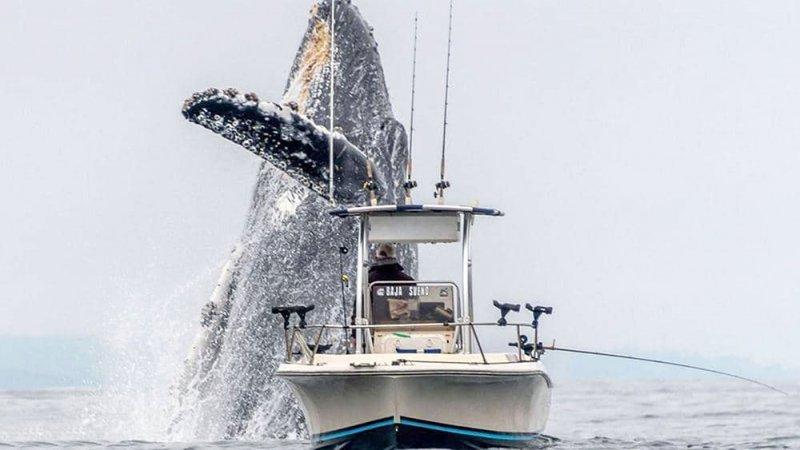 """السفينة والحوت الهائل في لقطة """"الثانية القاتلة"""""""