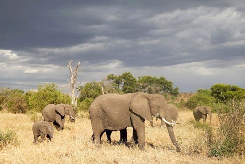 تنزانيا تغلق جزءا من محمية طبيعية أمام صيد الطرائد