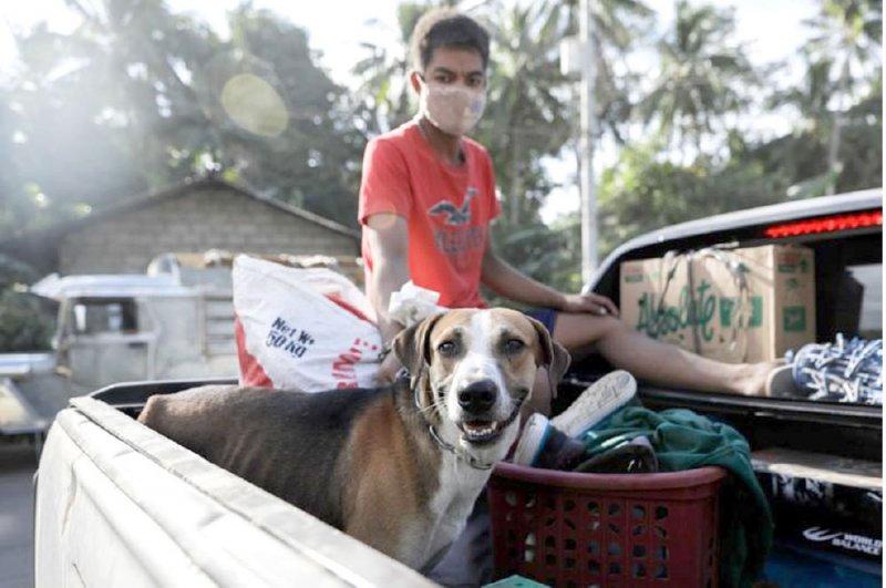 الفلبينيون يستعيدون حيواناتهم مع انحسار الخطر البركاني
