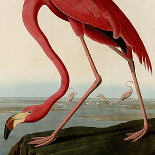 John James Audubon Canvas Art Prints