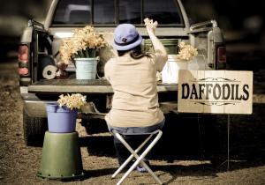 daffodilscolor-7