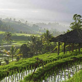 Honeymoon Bali