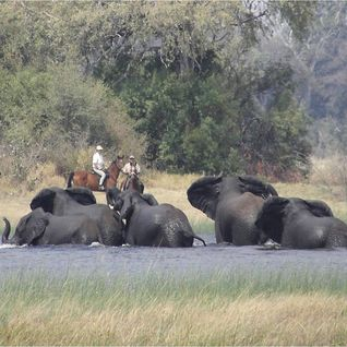 Riding safari in Botswana
