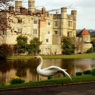 An image of Leeds Castle & grounds