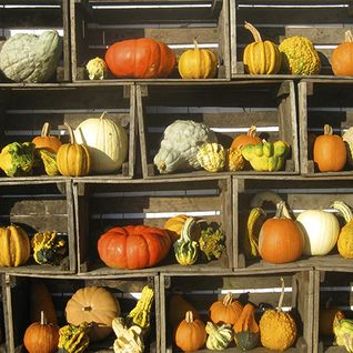 A picture of pumpkins displayed in wooden boxes
