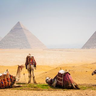 camels by the pyramids