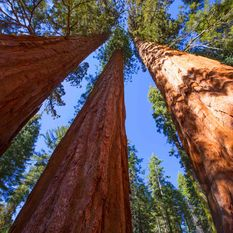 Trees in Yosemite National Park